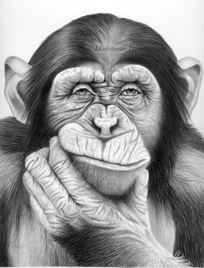 Line Drawing Of Monkey Face : Drawings by mark stewart showme design