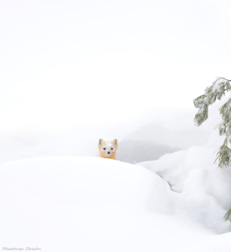 animals-in-winter-14