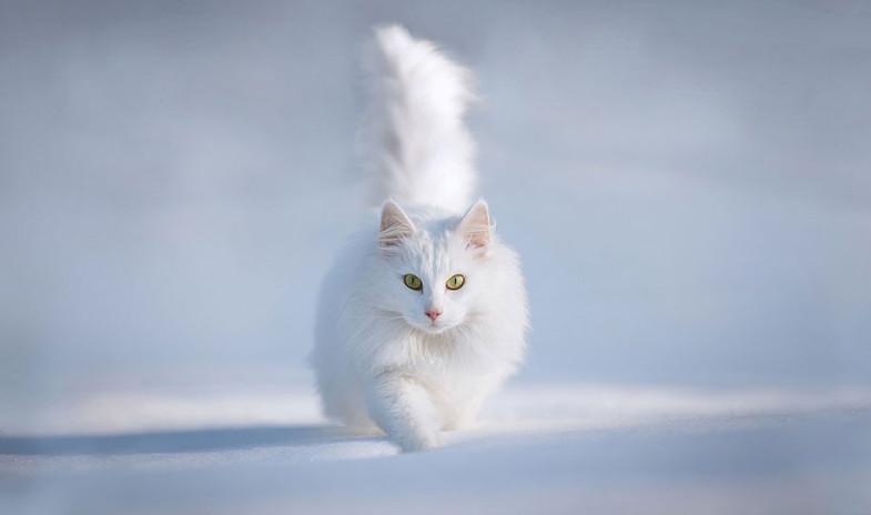 animals-in-winter-2