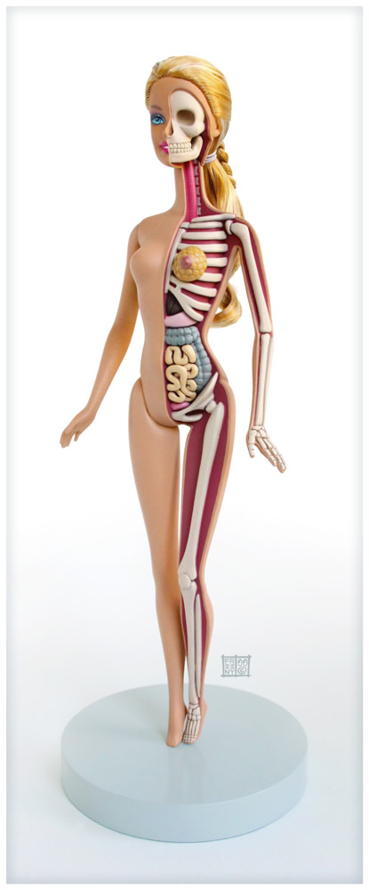 th_barbie_anatomical_model_by_freeny-d5dazp9