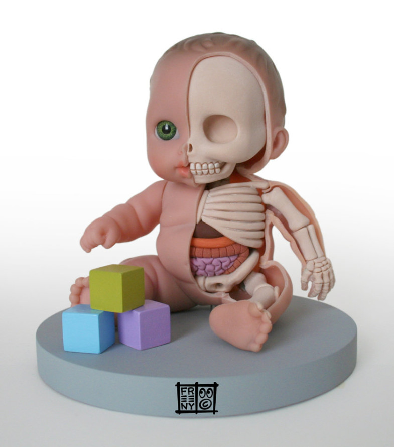 th_lil___custie_anatomical_model_by_freeny-d49l1pj