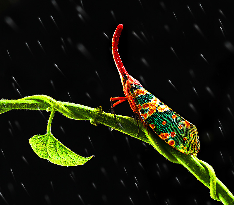 colorful leaf hopper by - photo #11